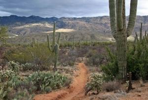 Tucson trail E
